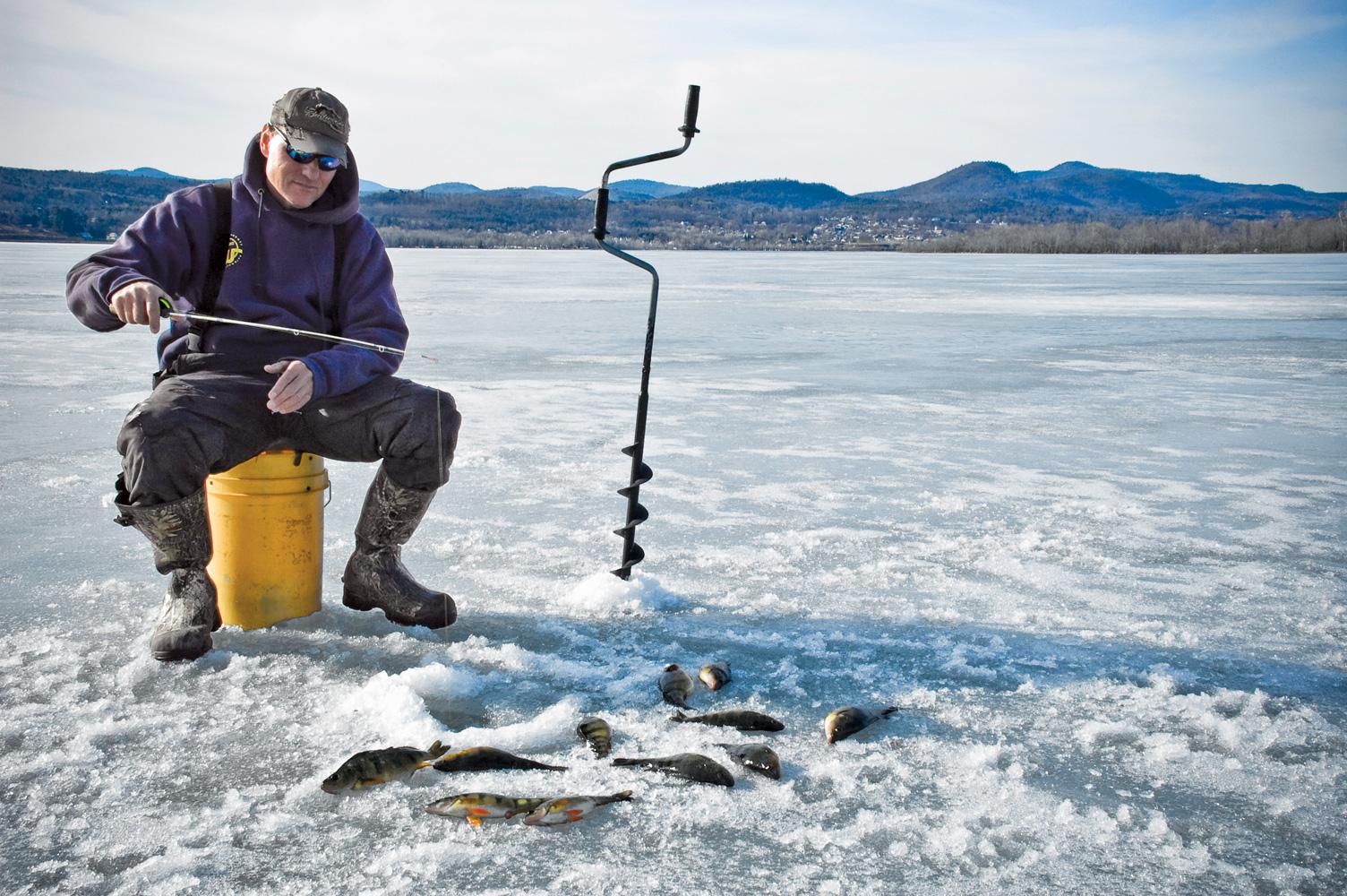 Adirondack life article gold under the ice adirondack life for Ice fishing perch